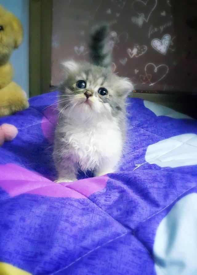 壁纸 动物 猫 猫咪 小猫 桌面 640_895 竖版 竖屏 手机